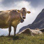 Paradis naturels retrouvés – Suisse, le renouveau des alpages