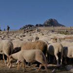 Au temps des bergers