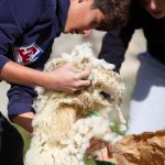 De laine et d'eau fraîche