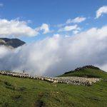 Élevage de montagne : ces métiers clés du territoire pyrénéen
