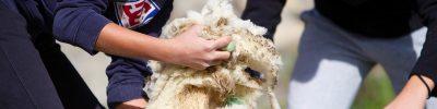 De laine et d_eau fraîche 3_Small01